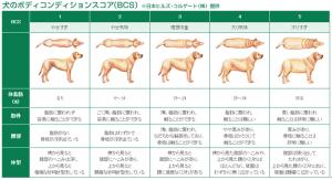 犬② BCS